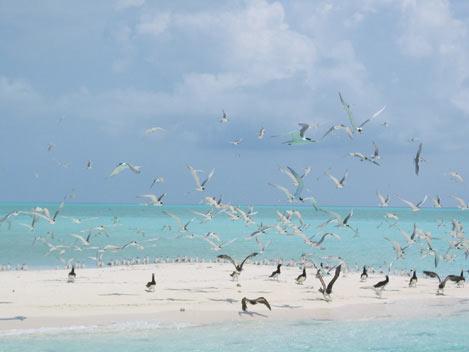 Tubbataha-Seabirds_- Photo by Michael-Marasigan