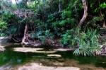 Philippine beach forest