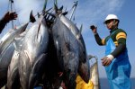 Commercial Fishing for Tuna Fish