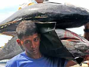 Fisherman carries large size of Tuna Fish as they transfer from Tuna Port to Public Market in General Santos City. ANDREW TADALAN/ FILE PHOTO